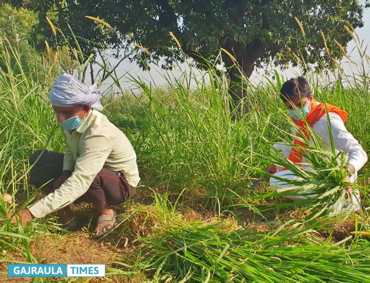 rajeev-tarara-cutting-fodder