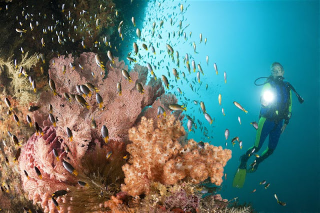 paradise Diving and snorkelling in raja ampat papua indonesia