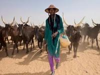 Ekiti: Herdsman arraigned for unlawful grazing over 25m farm