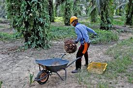 Malaysian palm oil giant hit with USA ban over abuse concerns