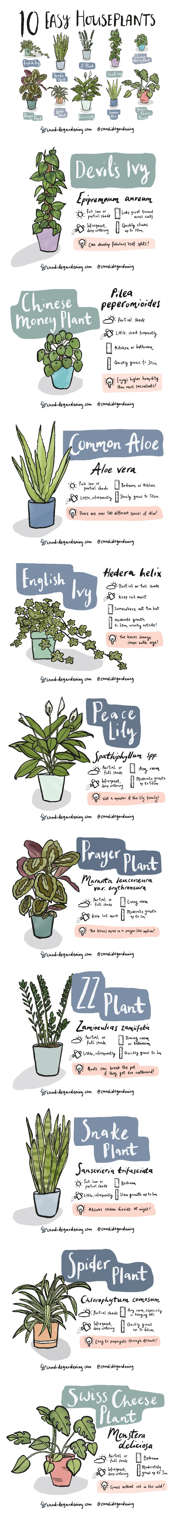 10 Houseplants That Are Actually Easy To Keep Alive #infographic