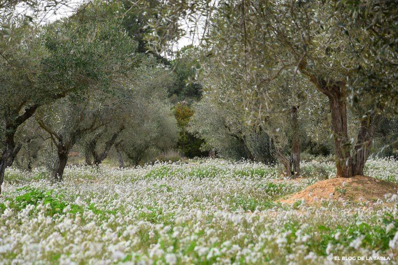 flores silvestres blanca y olivos