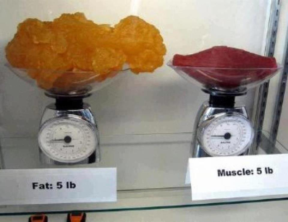 Muscle V Fat 115