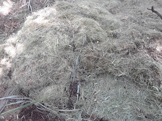 shredded palmetto after wood chipper