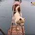 Βίντεο: Περνώντας τα εμπόδια...