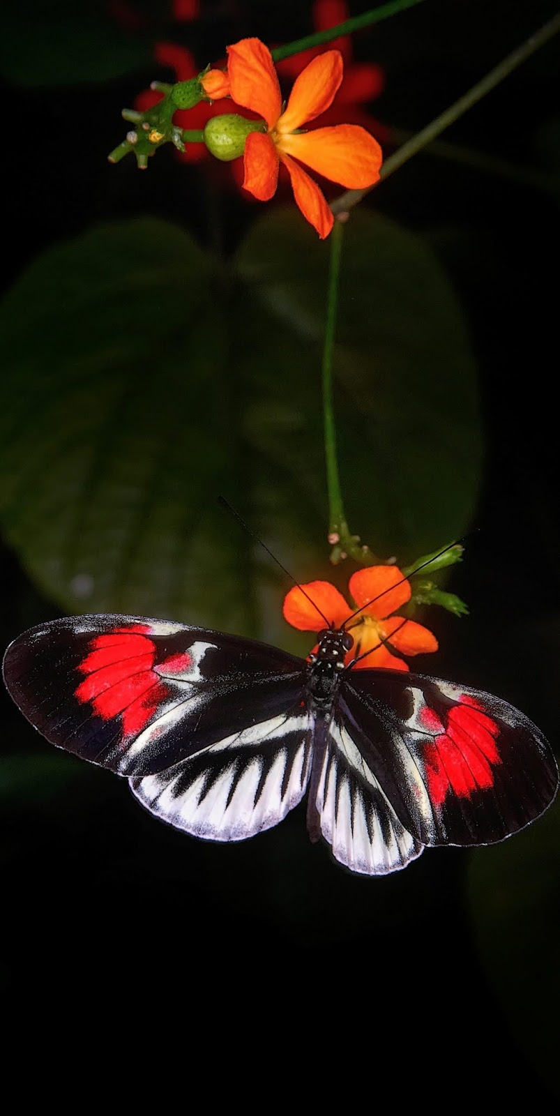 A colorful butterfly on a flower.