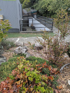 Foliage in front of fence around a basement courtyard with extremely wheelchair accessible stairs
