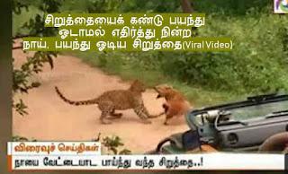சிறுத்தையைக் கண்டு பயந்து ஓடாமல் எதிர்த்து நின்ற நாய், நாயைக் கண்டு பயந்து ஓடிய சிறுத்தை(Viral Video), Tamil News video, Siruthaiyai kandu payandhu odamal edhirthu nindra naai, kuraikkum satham kettu payandhu poipinvaangiya sirutthai