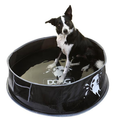 Border Collie sits in DOOG portable pop-up pool filled with shallow water