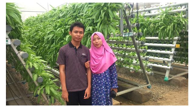 kebun-hidroponik-taman-botani-sukorambi
