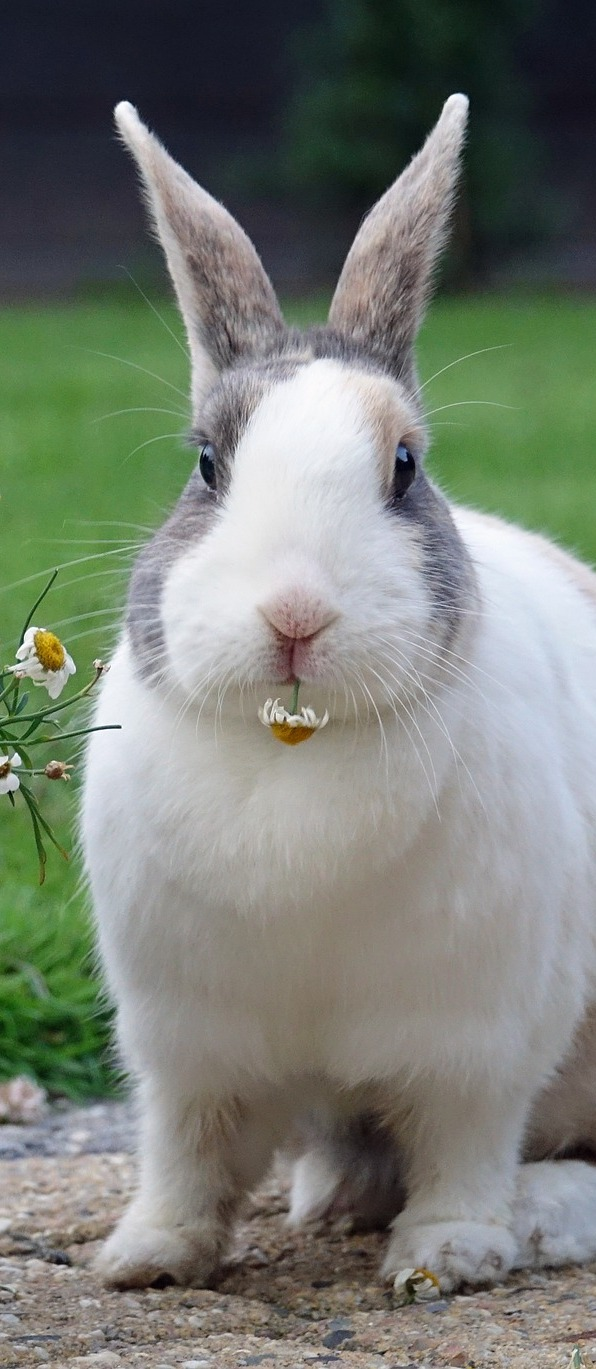 Photo of a cute rabbit.