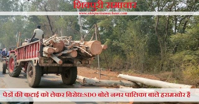 पेड़ों की कटाई को लेकर विरोध: SDO बोले नगर पालिका वाले हरामखोर है - Shivpuri News