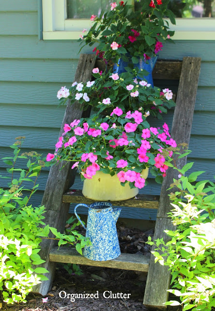 Photo of impatiens planted in tea kettles on a ladder