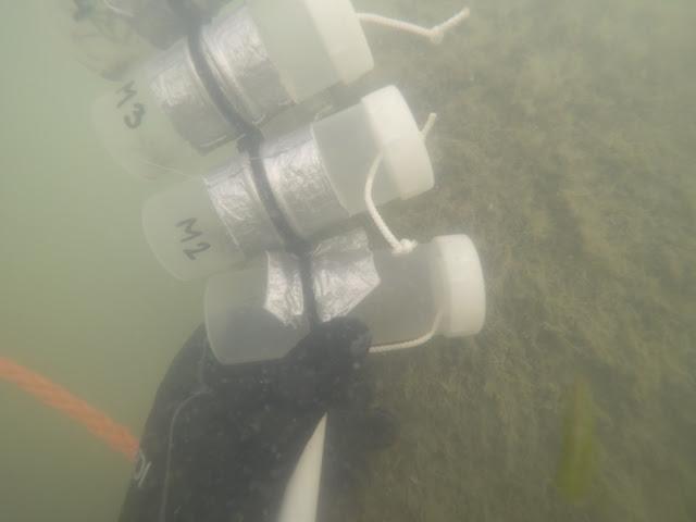 Veden alla otetussa kuvassa sukeltajan käyttämä näytepurkkisarja. Purkit on kiinnitetty toisiinsa narulla ja joka putkessa on erillisellä nyörillä kiinnitetty kierrekorkki varmistamassa, etteivät korkit mene hukkaan. Yhdessä putkessa erottuu putkilokasvi (Stuckenia pectinata) -näyte.