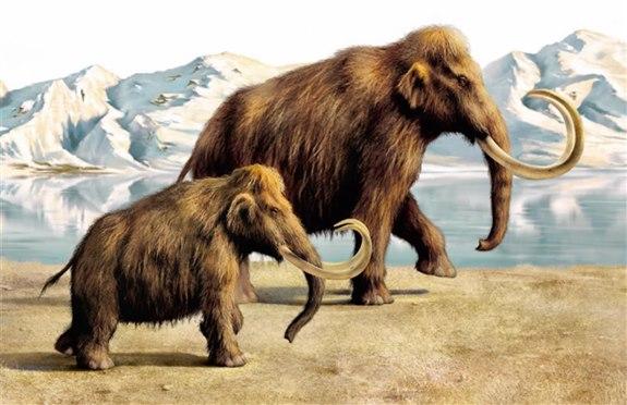 Mamut – M Hayvan İsimleri