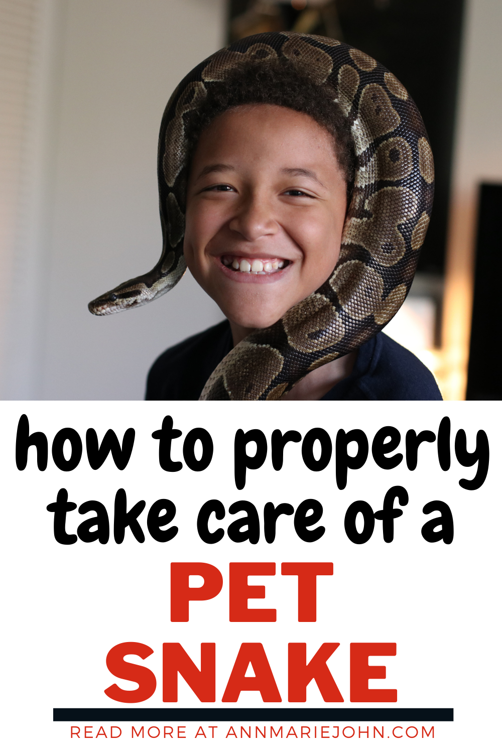 How to Properly Take Care of a Pet Snake