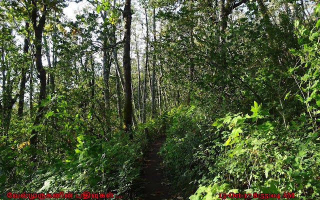 Cape Horn Loop Trail