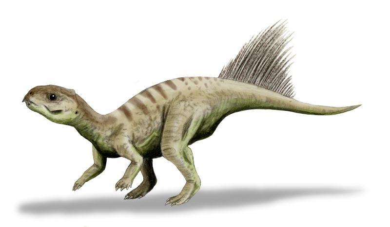 800 x 467 jpeg 30kBChasmatosaurus