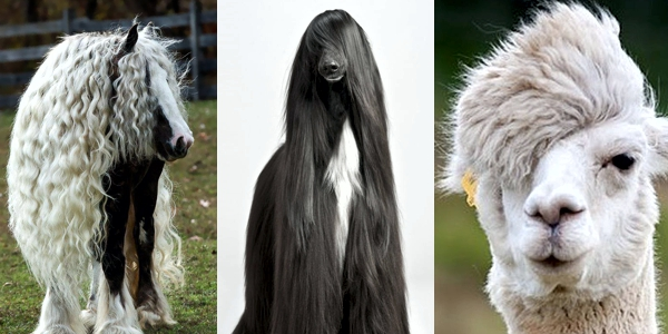 Great Hairstyles On... Animals!!!