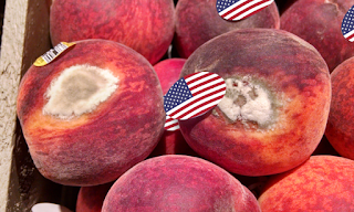 Let American Produce Rot