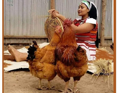 women empowerment in poultry sector