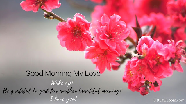 new hd beautiful good morning flowers images with quotes for girlfriend boyfriend 2020