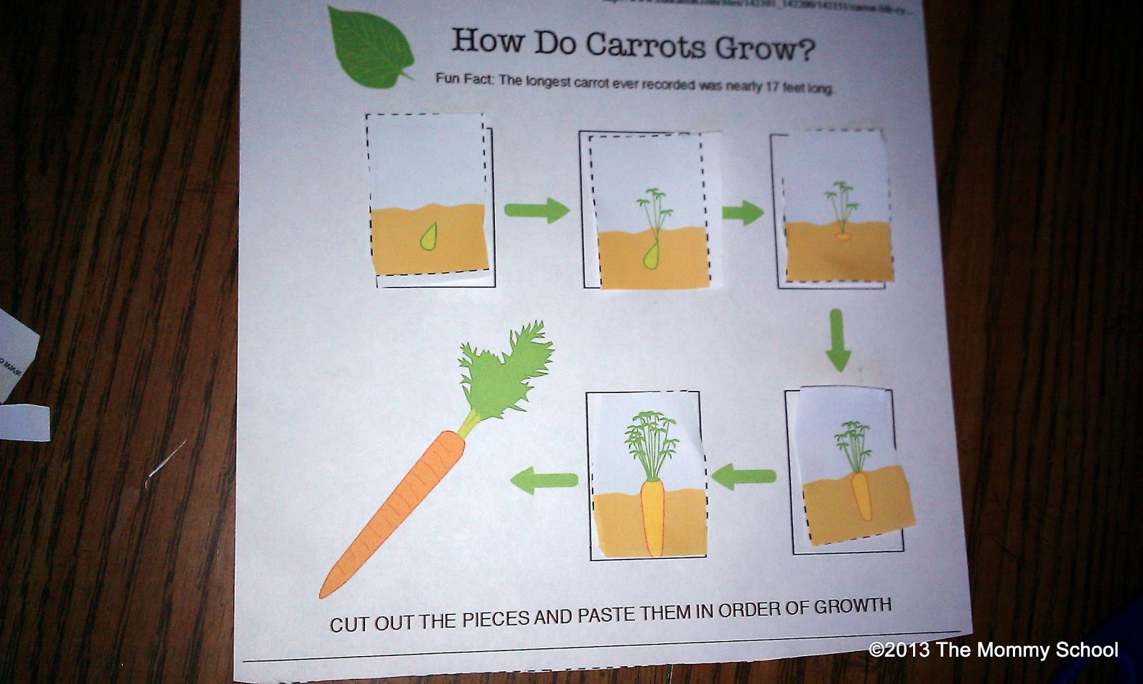 Carrot Plant Diagram 2005 Chevy Impala Stereo Wiring The Mommy School Seed Part 2