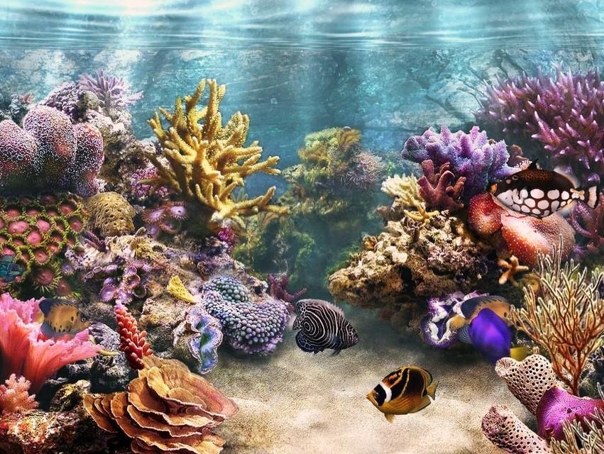 Indonesia Tourism Merancang Akuarium Terumbu Karang