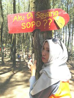 Spot pohon pinus dengan tulisan di Hutan Pinus Precet