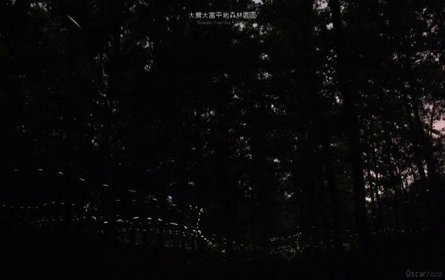 大農大富平地森林園區-11