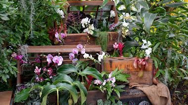 Orquídeas 2014 en Kew Gardens. Cazadores de plantas