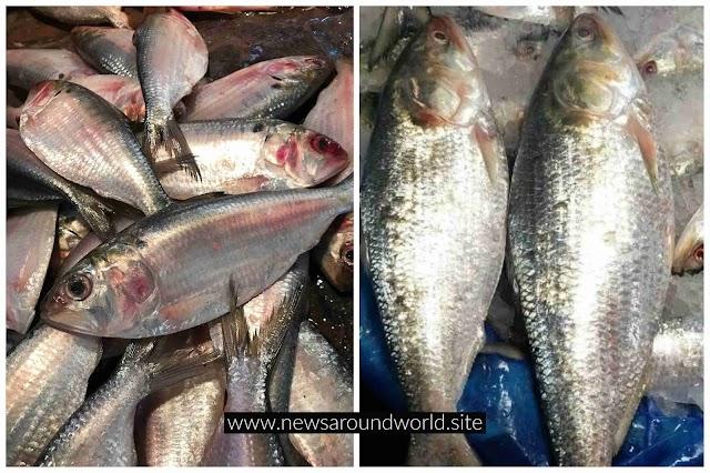 Bangladesh exported 19.8 tons of hilsa to India