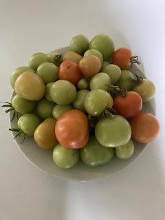 onrijpe tomaten rijpen
