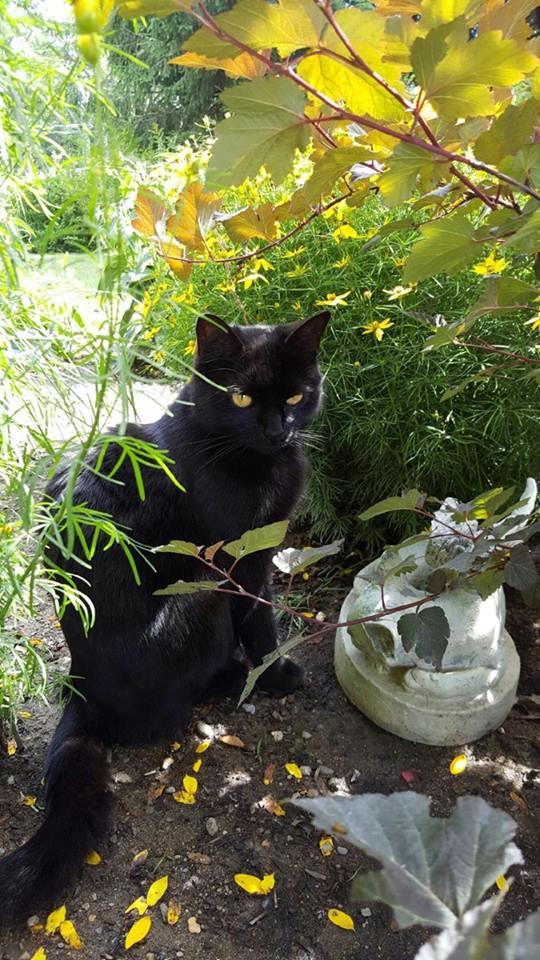 Kucing di Kebun