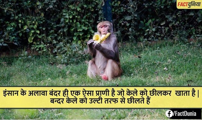 monkey facts in hindi