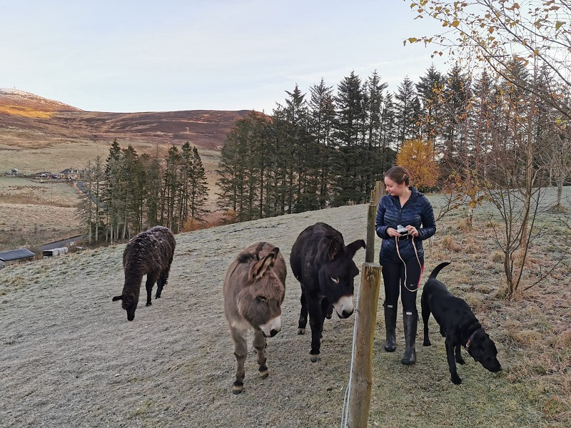 Llama, donkeys and dog - glamping in Scotland