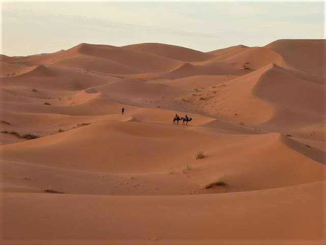dromedari sulle dune di merzouga