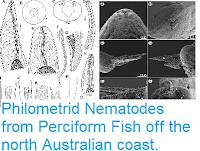 https://sciencythoughts.blogspot.com/2015/04/philometrid-nematodes-from-perciform.html