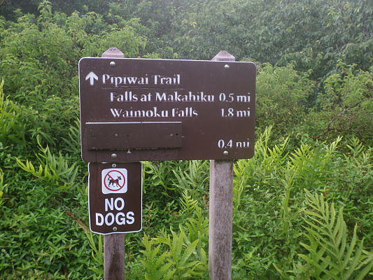 pipiwai trail hana maui