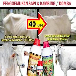 Penggemukan sapi dan kambing / domba