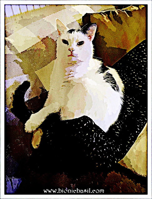 Smooch's Snuggly Selfie ©BionicBasil® Caturday Art Hop