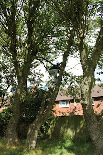 One of the young people liked to climb trees. So he did.