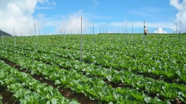 Albania produces over 1 million tons of vegetable per year