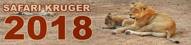 Safari-Kruger-2018