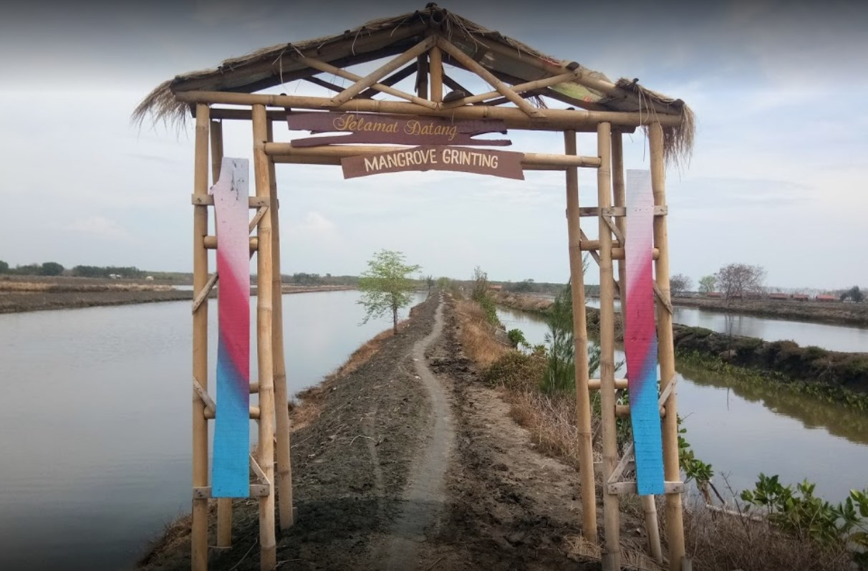 Tempat Wisata Mangrove Grinting atau Alas Jaran Brebes ...