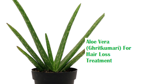 Aloe Vera (Ghritkumari) For Hair Loss Treatment