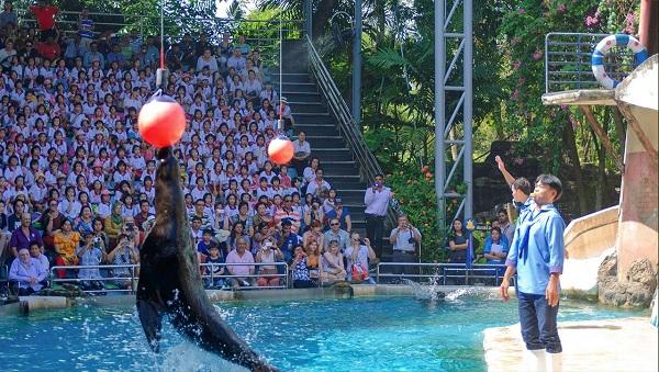 Marine Park - khu vực vui nhộn thứ hai ở Safari World mà du khách không nên bỏ qua