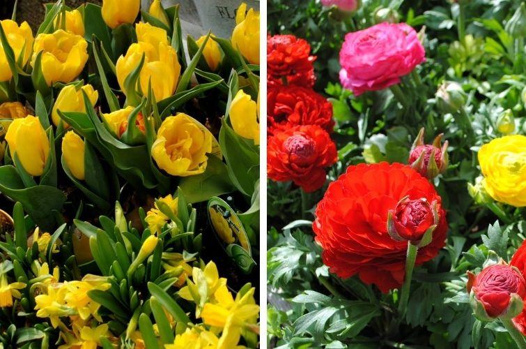 Frühling in bunten Farben