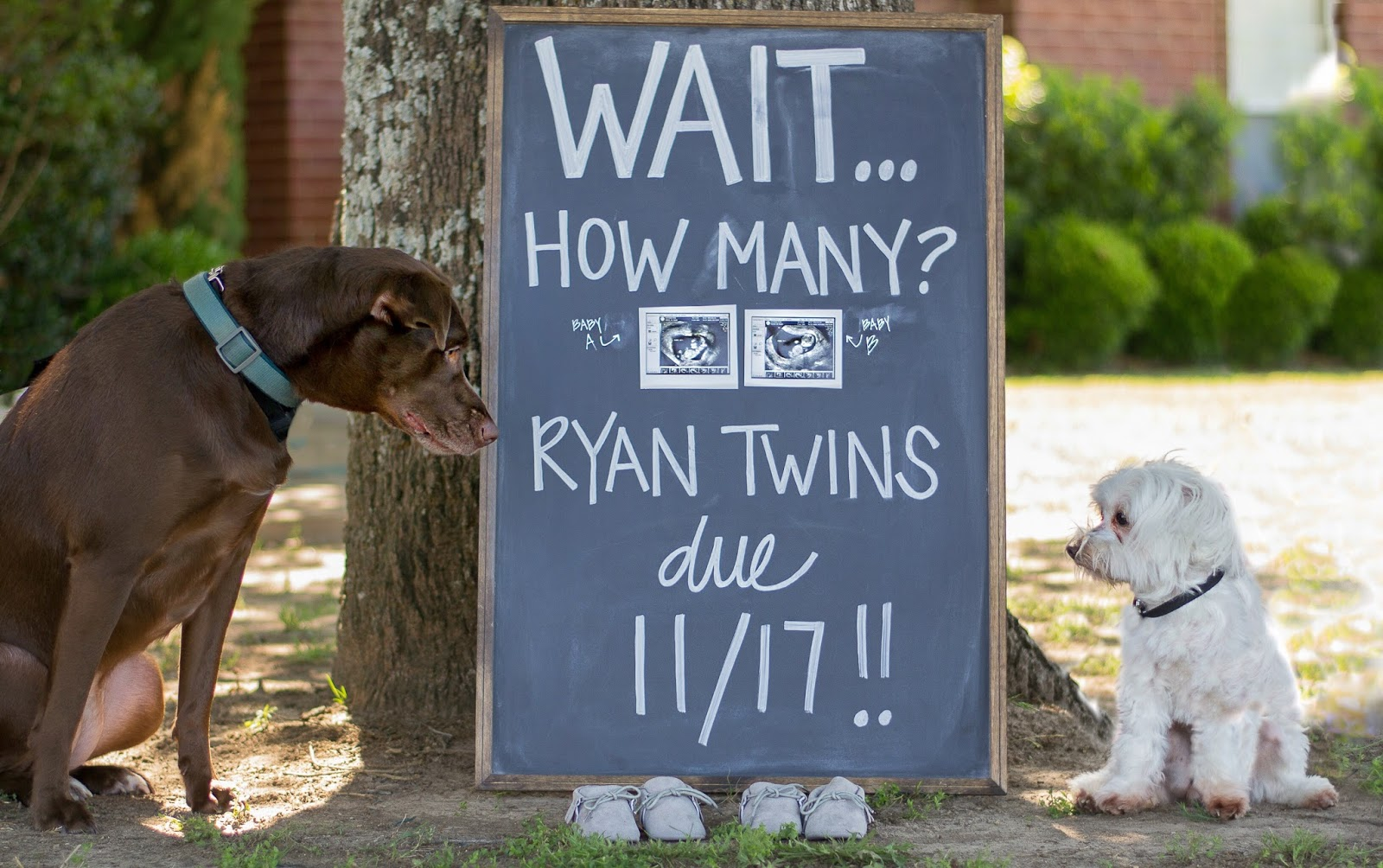 Twin_Pregnancy_Announcement