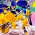 Estudio señala que los peces pueden sufrir cambios genéticos por las olas de calor